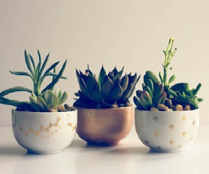 Summer DIY: Succulent Planter from The Logbook