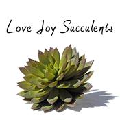 Love Joy Succulents